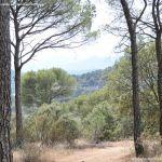 Foto Camino de Acceso a Lancha del Yelmo 16