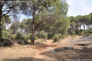 Foto Camino de Acceso a Lancha del Yelmo 18