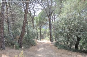 Foto Camino de Acceso a Lancha del Yelmo 20