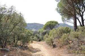 Foto Camino de Acceso a Lancha del Yelmo 32