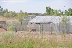 Foto Centro de Fauna Salvaje 5