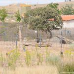 Foto Centro de Fauna Salvaje 7