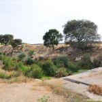 Foto Río Perales en Villamantilla 7