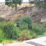 Foto Río Perales en Villamantilla 8