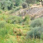 Foto Río Perales en Villamantilla 13