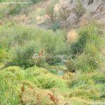 Foto Río Perales en Villamantilla 14