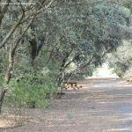 Foto Itinerario ecológico por el Suroeste Madrileño 17