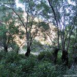 Foto Bosques de Valgallego 5