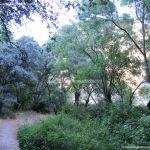 Foto Bosques de Valgallego 6