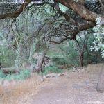Foto Bosques de Valgallego 8