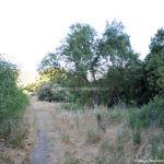 Foto Bosques de Valgallego 11