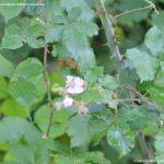 Foto Bosques de Valgallego 14