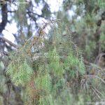 Foto Bosques de Valgallego 16