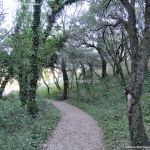 Foto Bosques de Valgallego 17