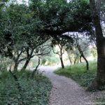 Foto Bosques de Valgallego 18