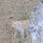 Foto Gato en Área Recreativa de Valgallego 1