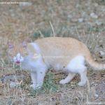 Foto Gato en Área Recreativa de Valgallego 2