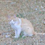 Foto Gato en Área Recreativa de Valgallego 3
