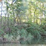 Foto Río Jarama en Talamanca de Jarama 5