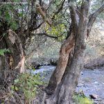 Foto Río Jarama en Talamanca de Jarama 10