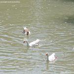 Foto Pasarela sobre el río Tajo 6