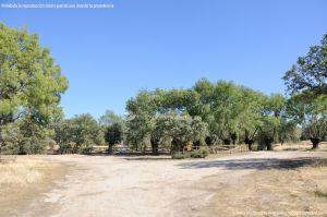 Foto Monte de Boadilla 12