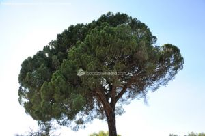 Foto Monte de Boadilla 13