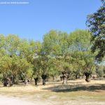 Foto Monte de Boadilla 15