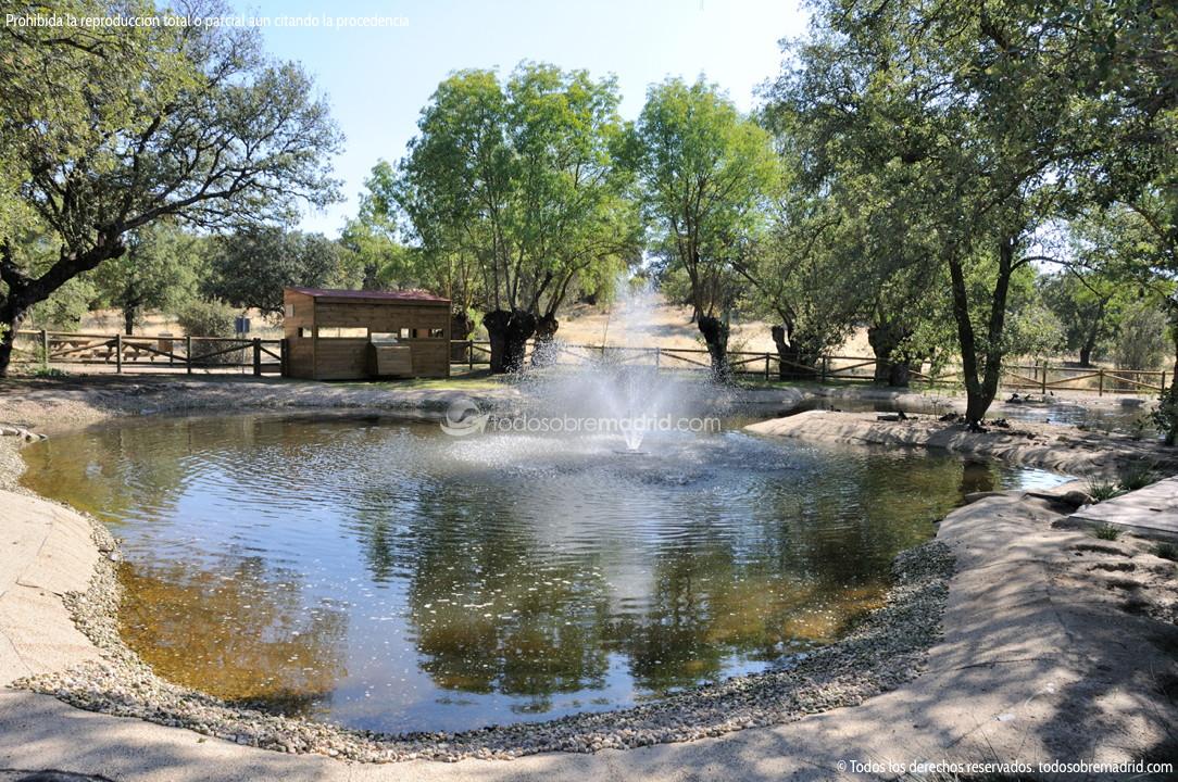 Laguna del arroyo de la fresneda 1 for Como hacer una laguna