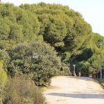 Foto Rutas en el Monte del Pilar 4