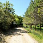 Foto Ruta Camino de San Galindo 10
