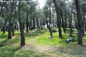 Foto Área Recreativa El Pinar y Parque Juan Pablo II 28