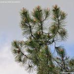 Foto Senda de las Gariñas 4