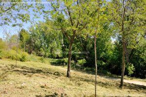 Foto Área de Recreo junto al Río Tajuña 5
