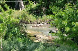 Foto Área de Recreo junto al Río Tajuña 7