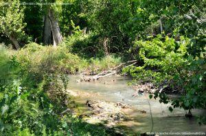 Foto Área de Recreo junto al Río Tajuña 10