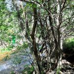 Foto Pesca en Río Madarquillos en Horcajo de la Sierra 8