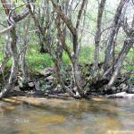 Foto Pesca en Río Madarquillos en Horcajo de la Sierra 12