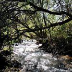 Foto Pesca en Río Madarquillos en Horcajo de la Sierra 18