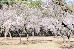 Foto Parque Quinta de los Molinos 2