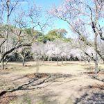 Foto Parque Quinta de los Molinos 3