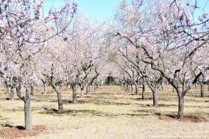 Foto Parque Quinta de los Molinos 5