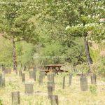 Foto Área Recreativa Soto de Bayona 11