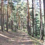 Foto Área Recreativa Peña Alta 14