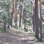 Foto Área Recreativa Peña Alta 15