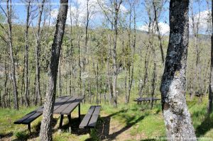 Foto Área Recreativa La Alberca Y La Tejera 10
