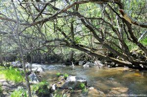 Foto Área Recreativa La Alberca Y La Tejera 43