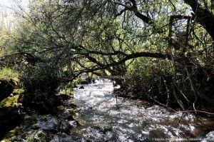 Foto Área Recreativa La Alberca Y La Tejera 47
