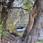 Foto Área Recreativa Huelga De San Bartolomé o del Puente Nuevo 15