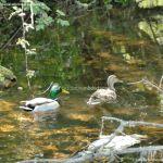 Foto Área Recreativa Parque Lineal Río Guadalix 8